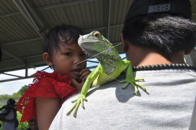 Hari ini, pameran reptil hingga festival kuliner
