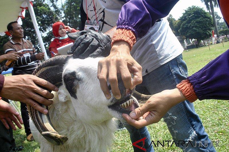 ASN Pemprov Jabar berkurban 36 sapi dan 46 domba