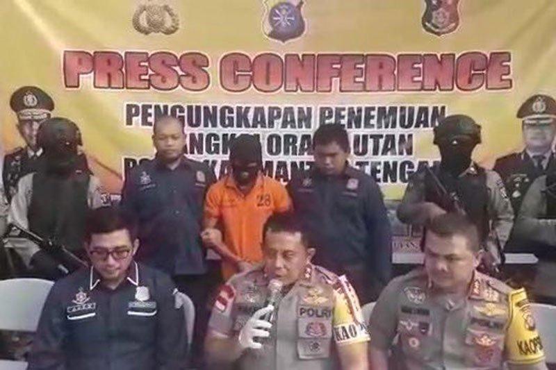 Kapolda Kalteng tegaskan pembunuhan orang utan tak terkait perusahaan