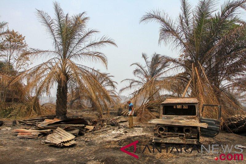 Karhutla Riau Hanguskan Rumah Warga