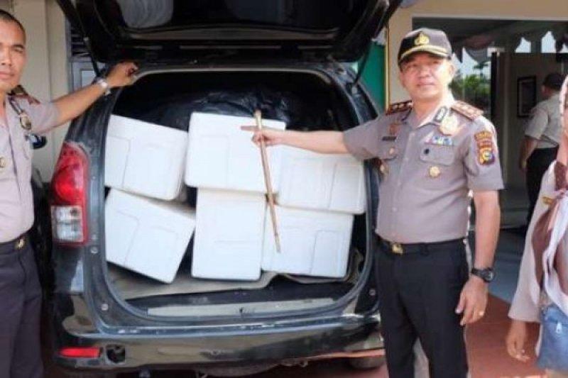 Polisi Sita Benih Lobster Senilai Rp32 Miliar