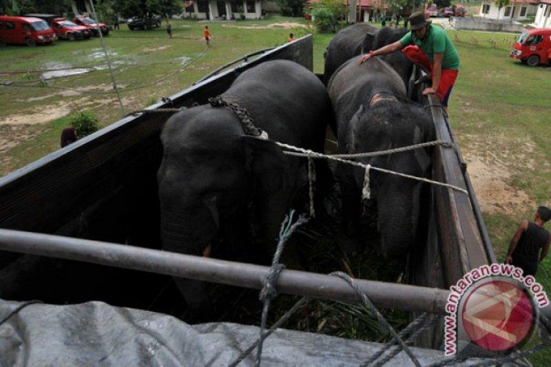 Menjaga populasi gajah sumatera dengan GPS colar