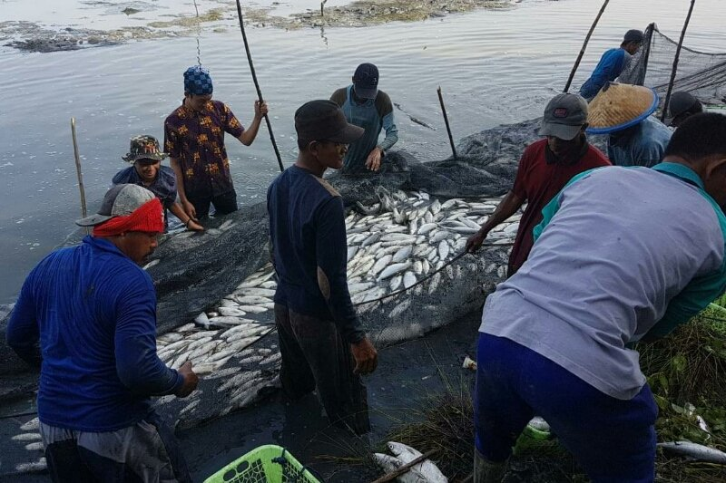 Menteri BUMN dorong perbankan optimalkan pembiayaan sektor perikanan