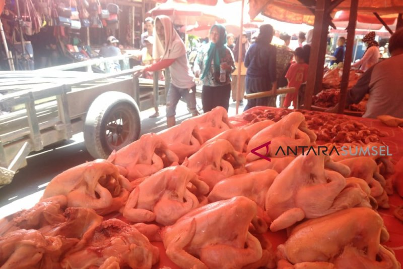 Harga daging ayam di Palembang masih tinggi