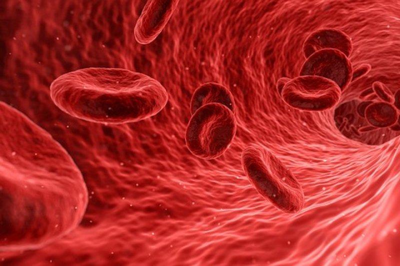 Kanker Darah Bukan Penyakit Keturunan Antara News Sumatera