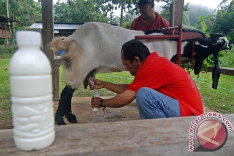 Terapi susu