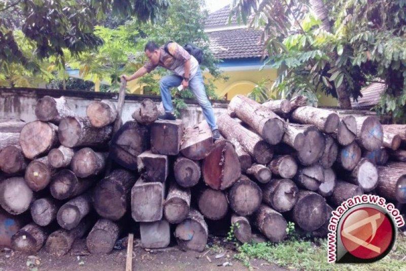 Kayu hasil perambahan hutan akan diberikan kepada korban gempa