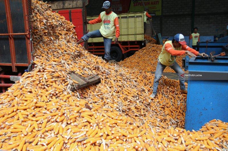 Kementan kembangkan kawasan jagung hibrida di Sulawesi Utara