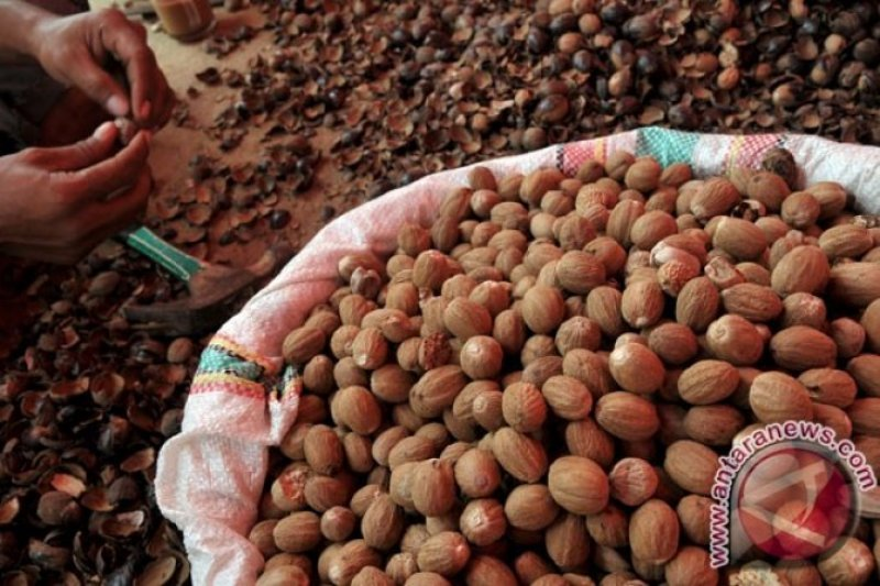 Wagub: Hampir 700.000 masyarakat Sulawesi Utara andalkan sektor perkebunan