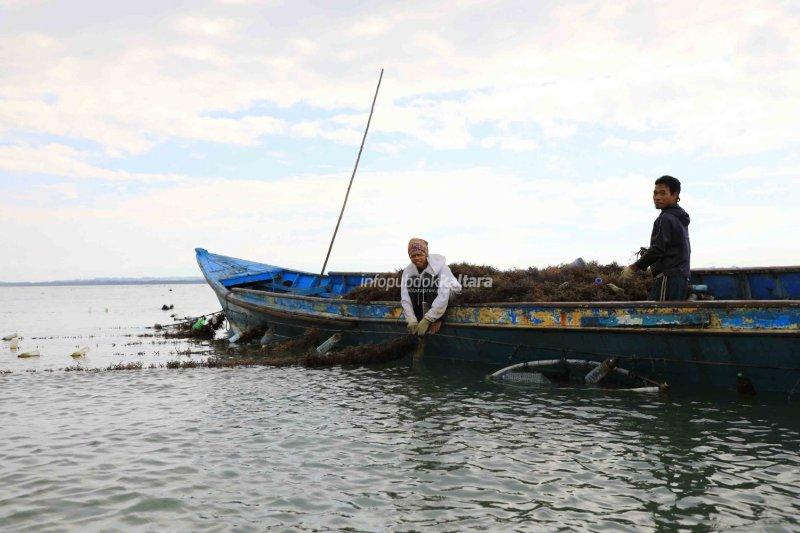 Pembudidaya Rumput Laut Banyak Melanggar, DKP Gencar Sosialisasi