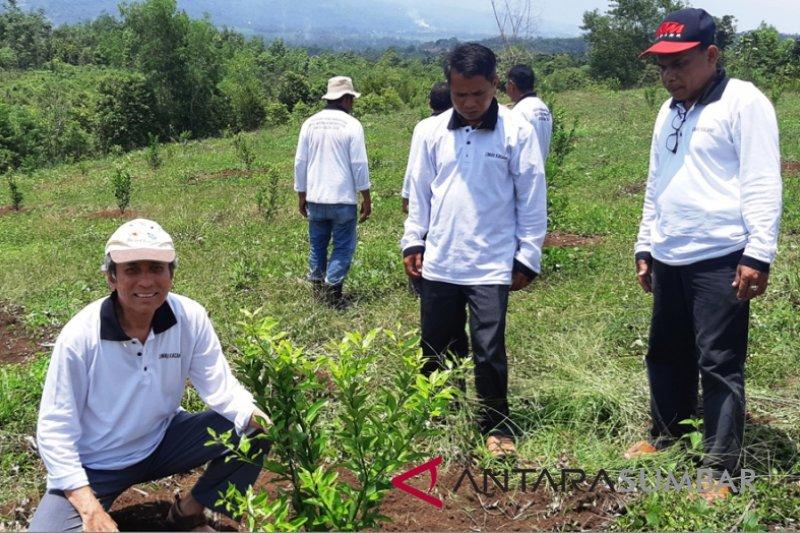 Legislator Solok dorong kembalikan kejayaan jeruk kacang