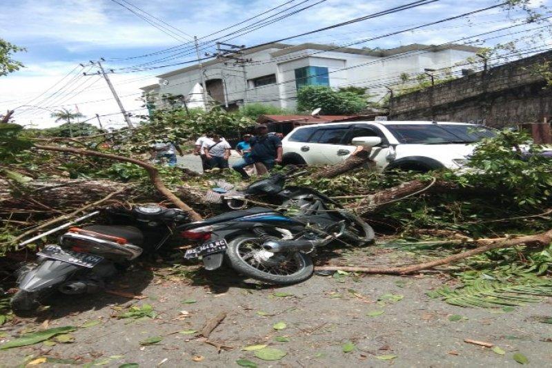 Tiga warga Jayapura terluka akibat pohon tumbang