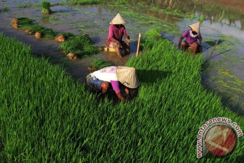 Tantangan mendorong pertumbuhan ekonomi Sulut