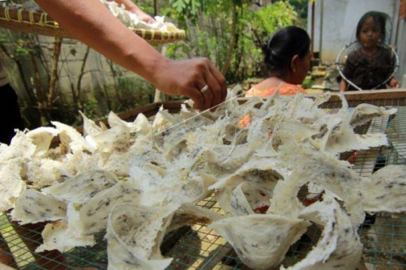 Sarang walet Indonesia makin dicari masyarakat China
