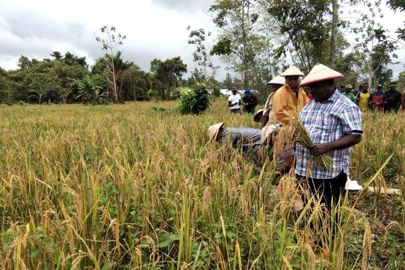 Petani Siret berharap Pemkab Asmat dukung peralatan pertanian