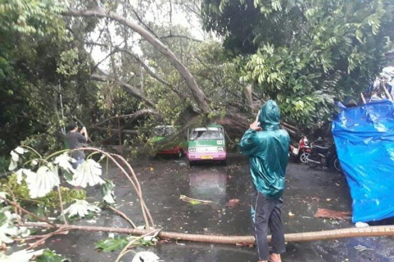 Angin kencang di Bogor dipicu awan Kumulonimbus