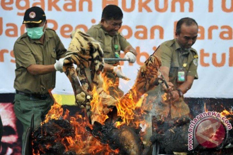 Mati di kebun binatang, Bangkai harimau dibakar