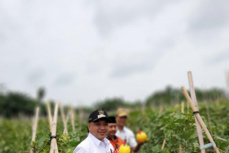 Kawasan wisata Asia Farm Pekanbaru targetkan 5.000 pengunjung