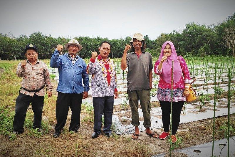 Kotim kembangkan 60 hektare cabai untuk tekan inflasi