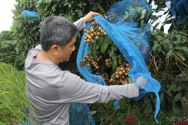Nilai tukar petani turun, Pendapatan petani Riau makin defisit