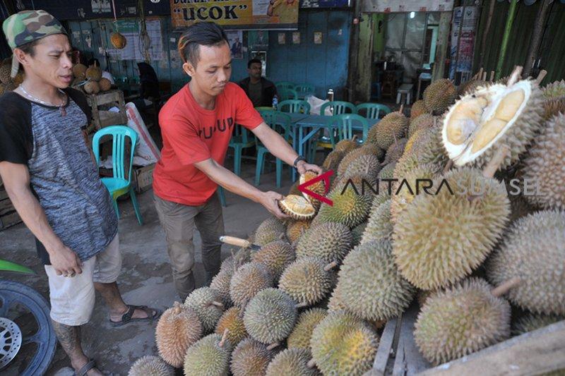 Renovasi destinasi wisata sentra durian Kuto