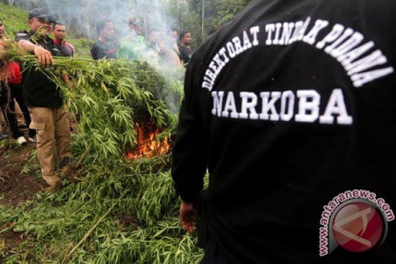 Polisi temukan ladang ganja di Lombok Utara