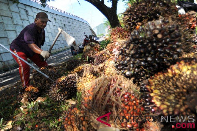 Harga sawit Riau naik