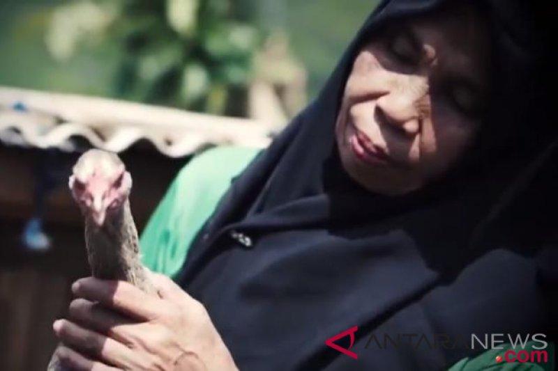 Ayam petelur bantuan pemerintah tingkatkan perekonomian peternak