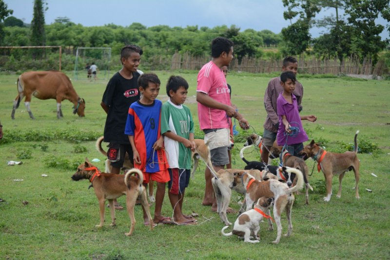 Kementan-FAO gelar pelatihan vaksinasi kendalikan rabies