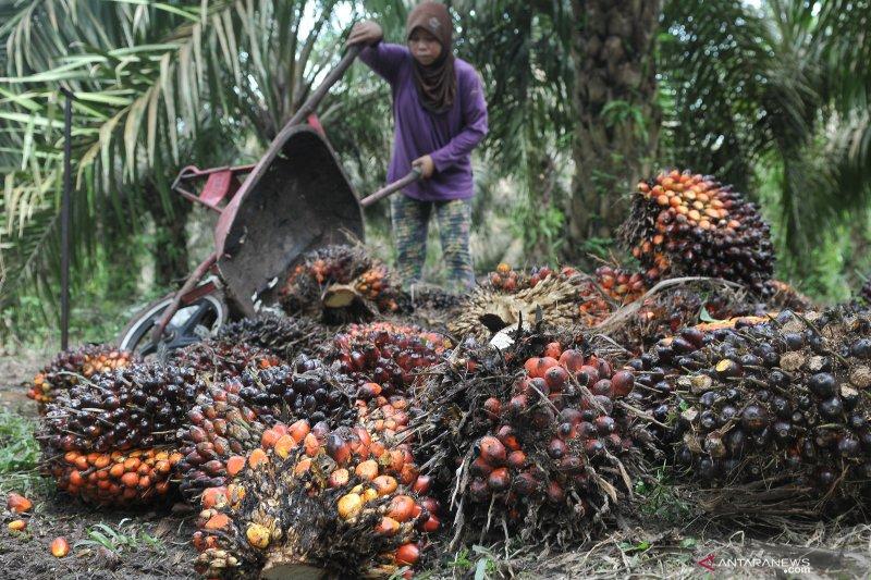 Sumatera Selatan harus percepat hilirisasi komoditas, sebut pakar