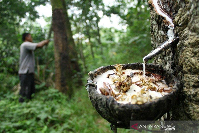 Investasi naik, BI: Industri karet dan makanan di Sumut mulai pulih