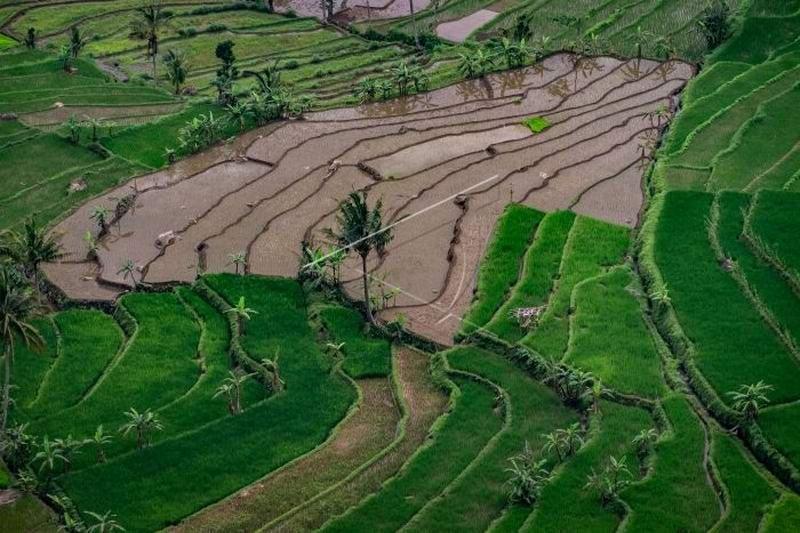 Urgensi membenahi data pangan Indonesia