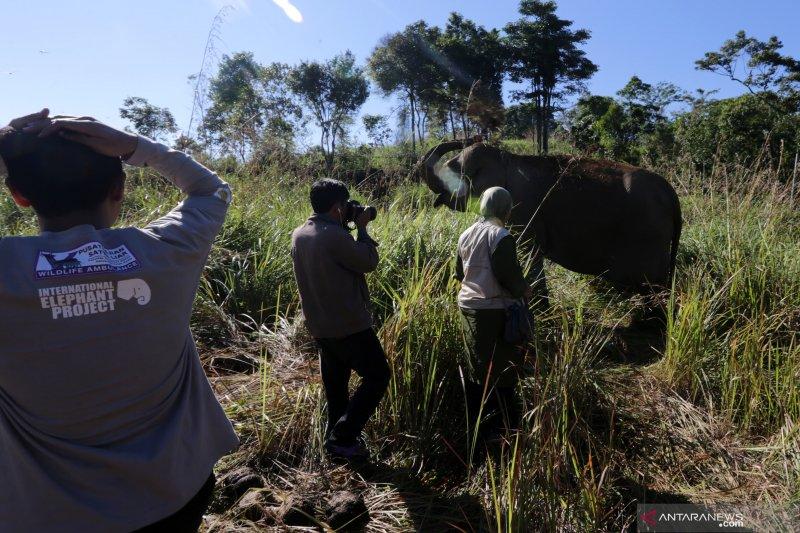 Walhi: gangguan gajah di Aceh akan berlanjut tanpa penghentian alih fungsi hutan