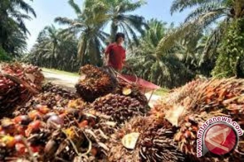 Greenpeace Kecewa Capres Jokowi dan Prabowo Dukung Biodiesel, ini sebabnya