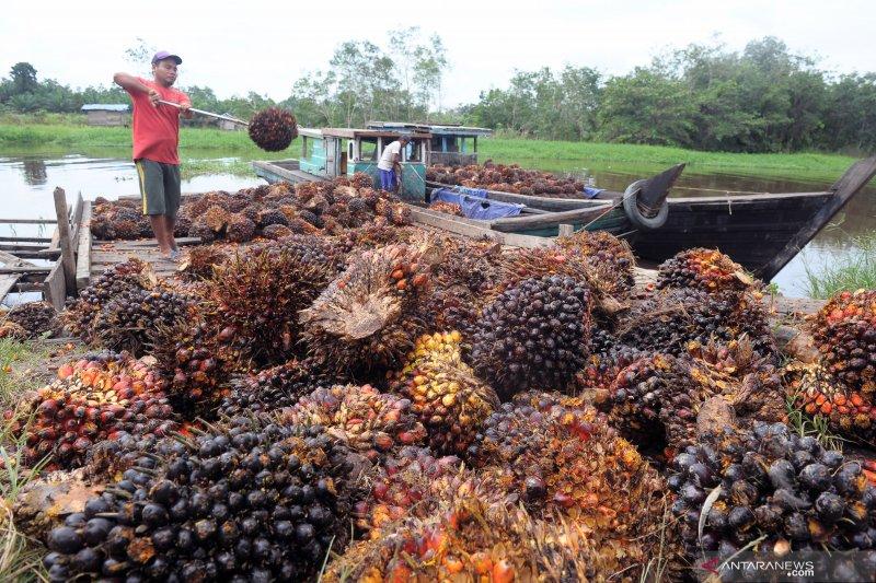 Harga CPO di Jambi anjlok Rp631 per kilogram