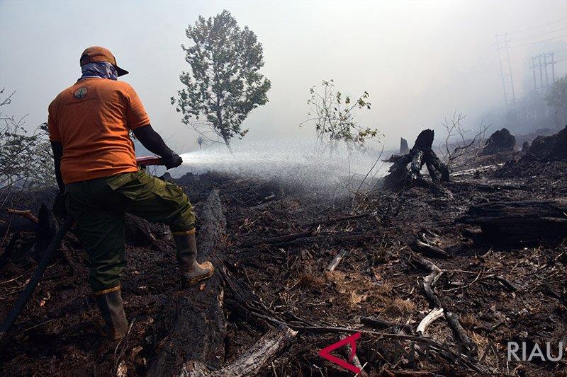 Kebakaran Lahan Bermunculan di Dumai, termasuk di Lahan Konsesi Chevron