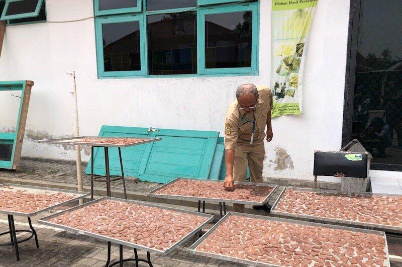 Plasma pisang Yogyakarta hasilkan berbagai makanan olahan pisang