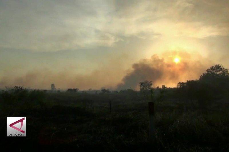 Kebakaran lahan timbulkan kerugian paling dahsyat