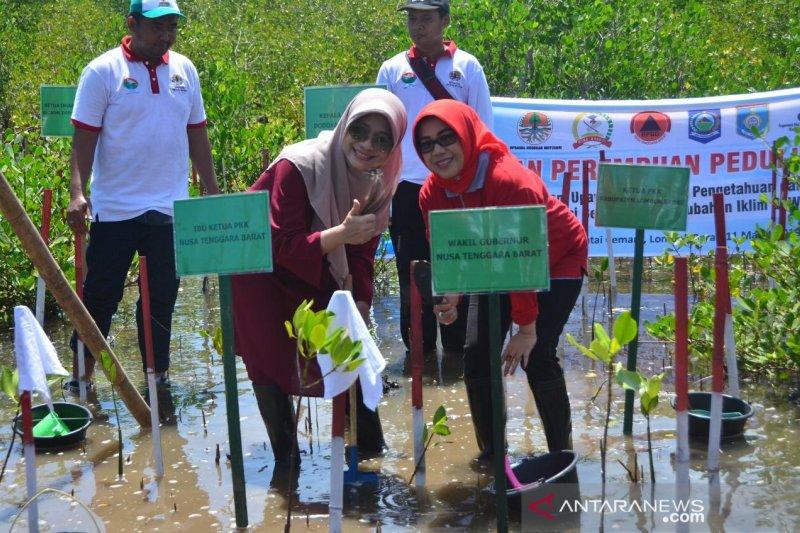 Istri menteri Kabinet Kerja tanam mangrove di Lombok Barat