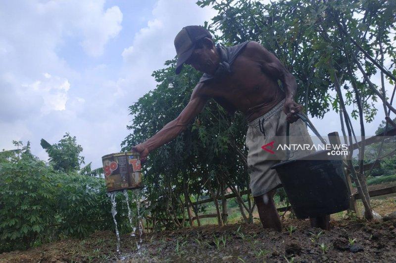 Petani memanfaatkan bantaran Kanal Banjir Barat untuk bercocok tanam