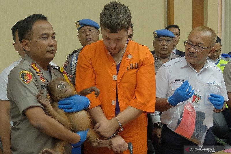 Penangkapan WN Rusia penyelundup orangutan