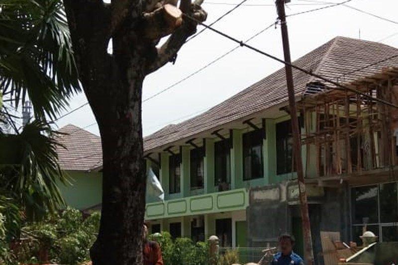 Penebangan pohon di dekat jaringan listrik