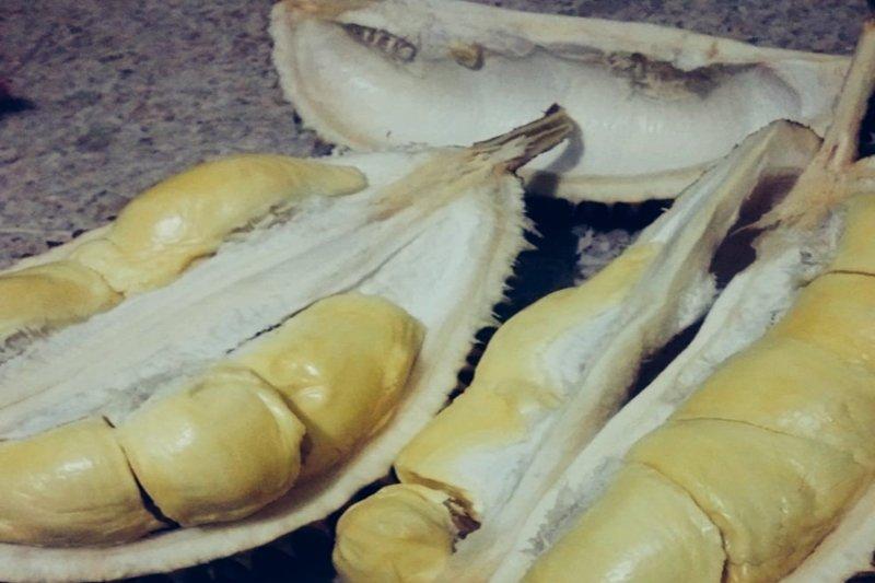 Durian Padang jadi rebutan di Palembang