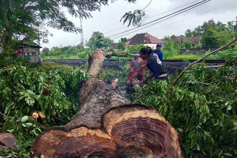 LSM laporkan pembalakan liar puluhan pohon sonokeling di Tulungagung