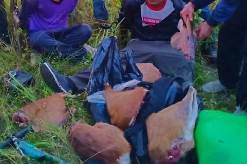 Pemburu rusa ditangkap di Taman Nasional Way Kambas Lampung