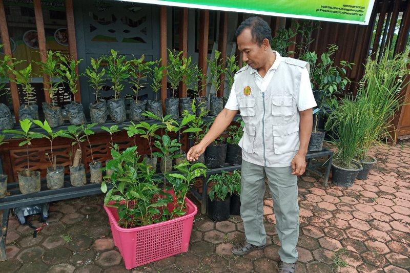 Bantuan Alsintan  menumpuk di Dinas Pertanian Wondama