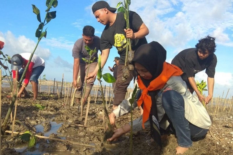 Mahasiswa tanam 6.500 mangrove di Pantai Pohijo