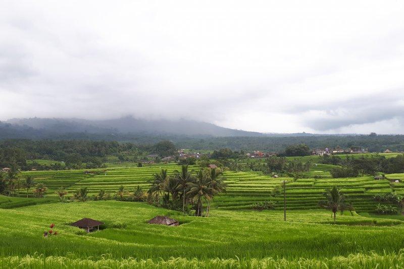 Alih lahan salah satu ancaman subak sebagai Warisan Dunia