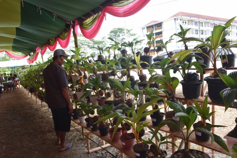 Festival Bonsai Kelapa