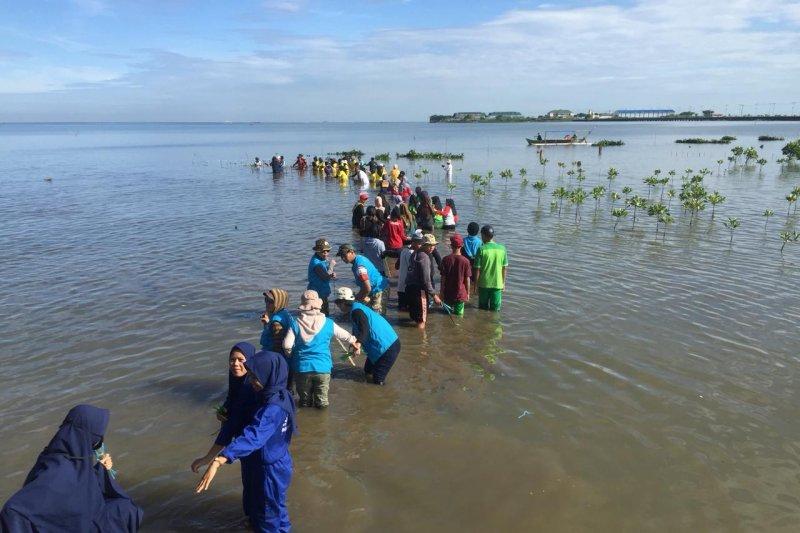 15 ribu bibit mangrove ditanam di perkampungan nelayan Untia, Makassar